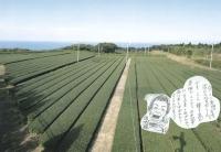 茶畑-3-w.jpg